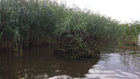Floating Hide, Wildlife