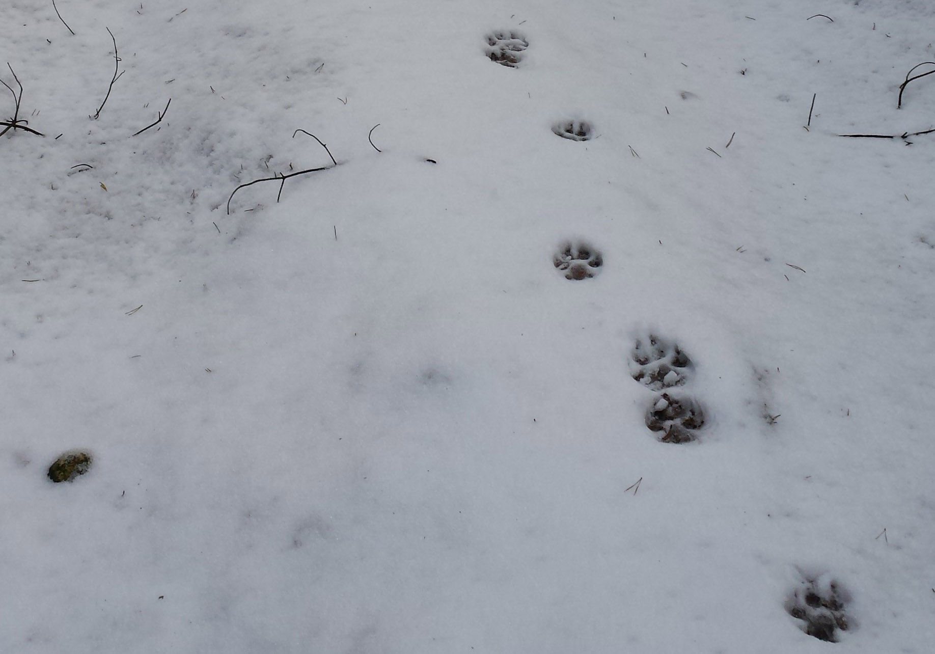Wolf Tracks, Wildlife
