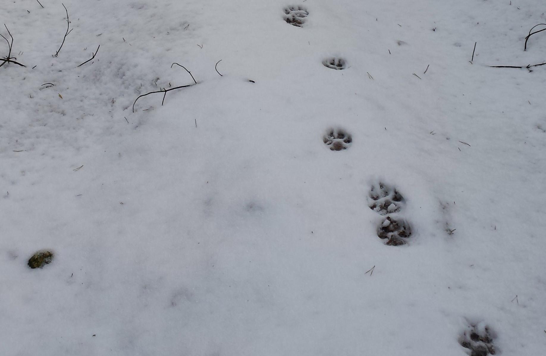 Wolf Tracks, Wildlife