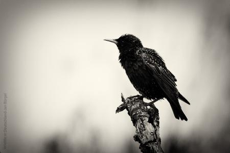 Vögel, birds